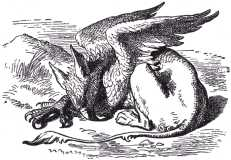 They very soon came upon a Gryphon, lying fast asleep in the sun.